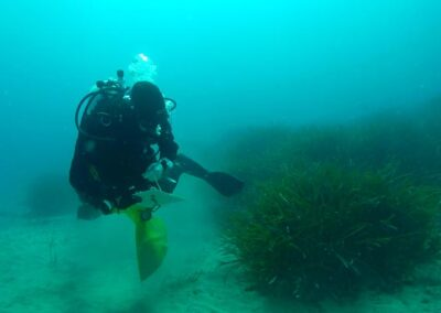 Varietà mare e mappatura degli habitat di pregio in vista di ripascimento e modifica delle opere costiere